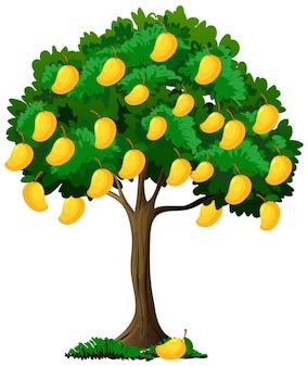Gele mangoboom geïsoleerd op wit