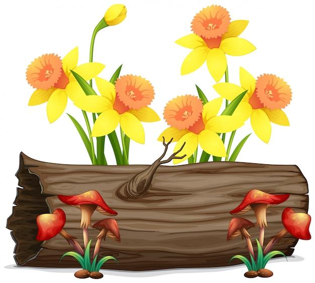 Gele narcisbloemen en paddestoelen op wit