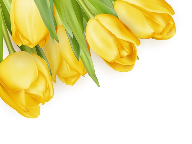Gele verse tulpen op wit.