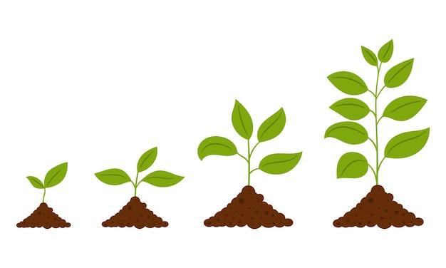 Geleidelijke groei van de plant geïsoleerd op wit