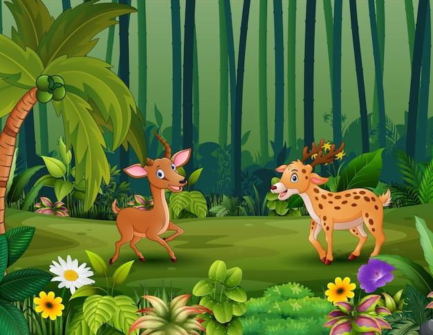 Gelukkige herten die in de jungle spelen