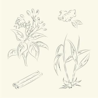 Gember & kaneel illustratie