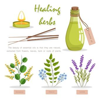 Genezende kruiden advertentie vectorillustratie. fles met essentiële olie gemaakt van aziatisch sandelhout, geurig olibanum en aromatische lavendel.