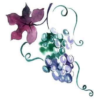 Geschilderde aquarel druif. vector illustratie