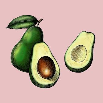 Gesneden rijpe groene avocado vector