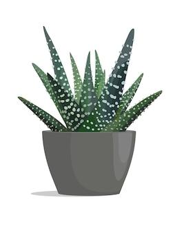Gestreepte cactus in donkere pot op witte achtergrond.