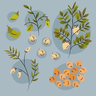 Getekende kikkererwtenbonen en plant