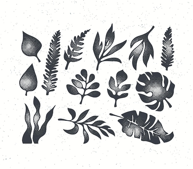 Getextureerde zwarte grunge geïsoleerde palm, varen, monstera en andere tropische bladeren collectie.