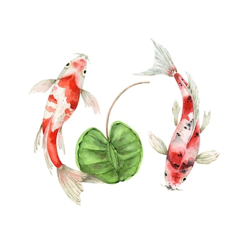 Gevlekte karpervissen in water met plant vector aquarel