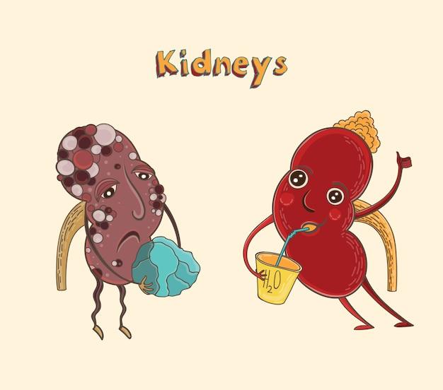 Gezonde en zieke menselijke nieren