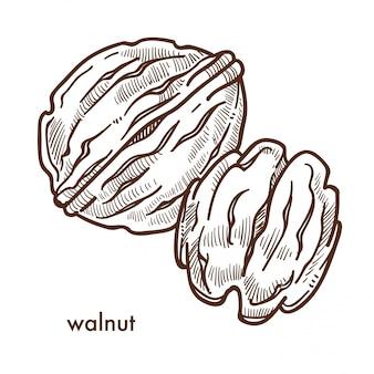 Gezonde heerlijke walnoot in harde schaal