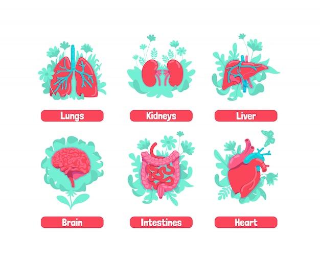 Gezonde interne anatomische systeem platte concept illustraties set