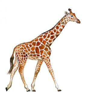 Giraf in waterverf