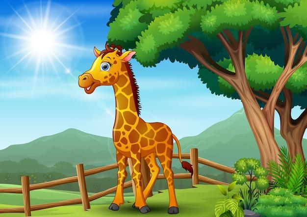 Giraffe staande binnen een hek in de dierentuin