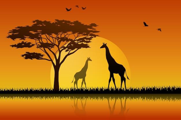 Girafsilhouet in zonsondergang bij savanah