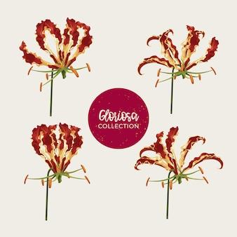 Gloriosa flowers-illustratieset