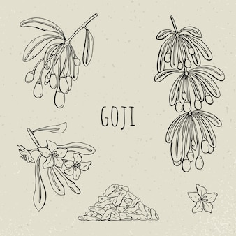 Goji op een tak hand getekende set. collectie bloeiende, droge bes. de vectorschets isoleerde zwart-witte uitstekende illustratie.