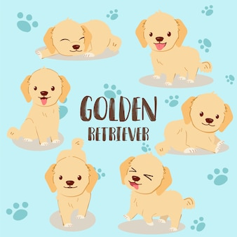 Golden retriever pack set