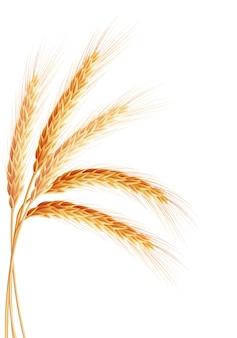 Gouden tarweoor na de oogst.