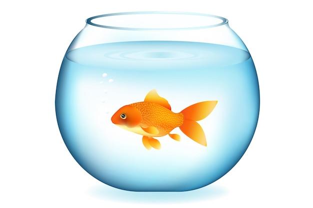 Gouden vissen in aquarium, die op wit worden geïsoleerd
