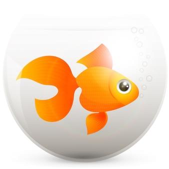 Goudvis in een vissenkom