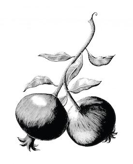 Granaatappel fruit tak hand tekenen vintage gravure illustratie op witte achtergrond