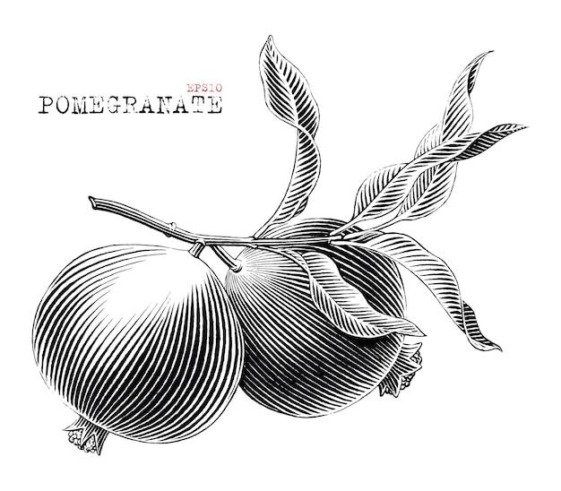 Granaatappel tak hand getekend vintage gravure stijl zwart-wit illustraties geïsoleerd op een witte achtergrond