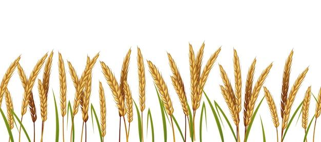 Granen landbouw horizontale rand naadloze patroon