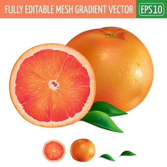 Grapefruitillustratie op wit