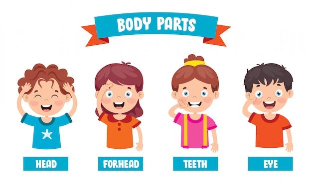Grappig kind dat menselijke lichaamsdelen toont