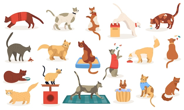 Grappige katten. leuke schattige kitty katten, slapen spelen stamboom rassen huisdieren, binnenlandse kitten tekens illustratie pictogrammen instellen. binnenlandse huiskat, stamboom en ras karakter