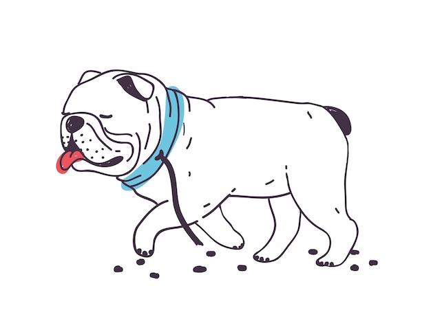Grappige ontsnapte hond die met gescheurde riem aan halsband loopt. leuke ondeugende geïsoleerde buldog. slecht gedrag van huisdieren of huisdieren