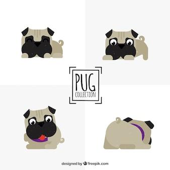 Grappige pugs met mooie stijl