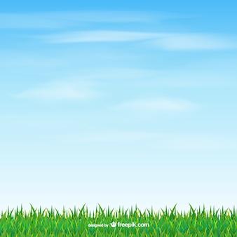 Gras en hemel vector