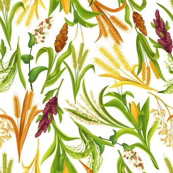 Gras graangewassen, landbouwgewassen naadloze patroon, vectorillustratie. graanplanten van rijst, tarwe, maïs, rogge, gerst, gierst, boekweit, sorghum, haver, quinoa, proso.