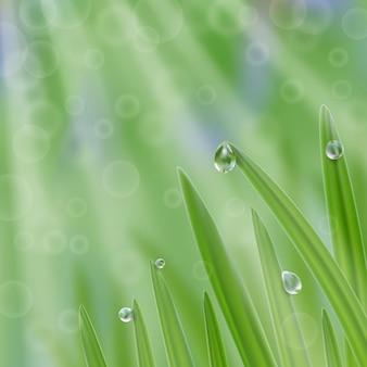 Gras in druppeltjes water met zonnestralen achtergrond een frisse natuurcompositie