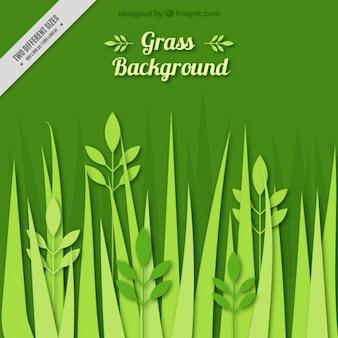 Grass background vlakke stijl