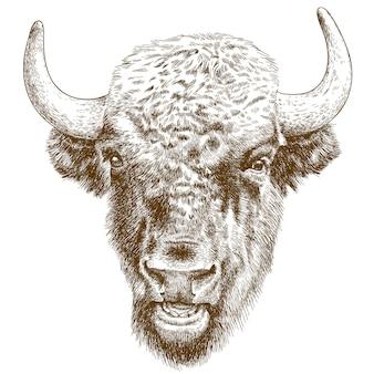Gravure antieke illustratie van bizonhoofd