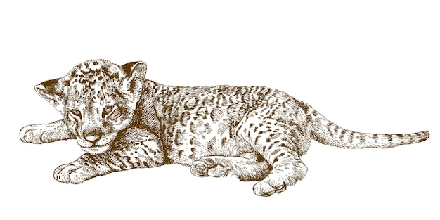 Gravure antieke illustratie van leeuwenwelp