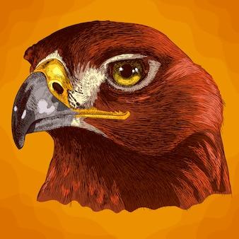 Gravure illustratie van adelaarshoofd