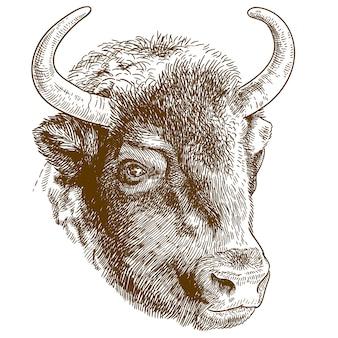 Gravure illustratie van bizonhoofd