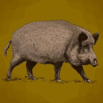 Gravure illustratie van everzwijn