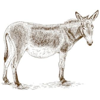 Gravure illustratie van ezel