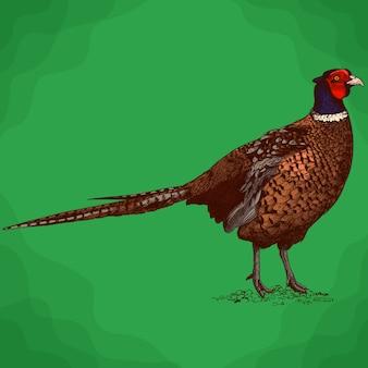 Gravure illustratie van fazant