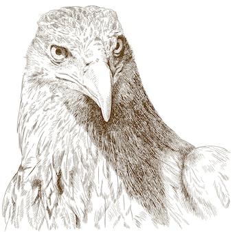 Gravure illustratie van groot adelaarshoofd
