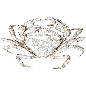 Gravure illustratie van krab