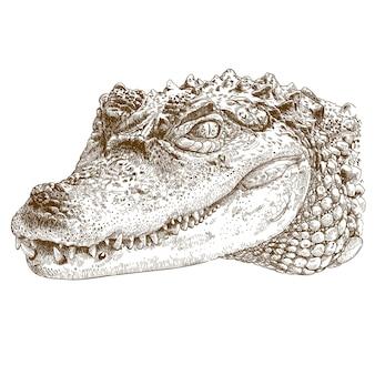Gravure illustratie van krokodil hoofd