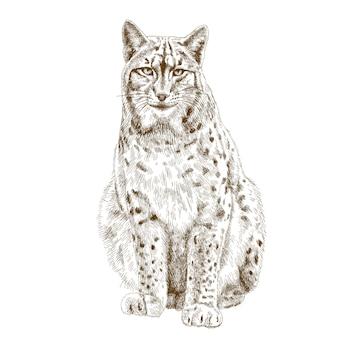 Gravure illustratie van lynx