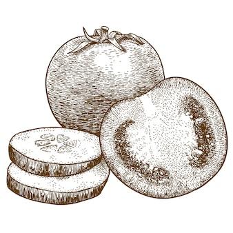 Gravure illustratie van plakjes tomaat en komkommer