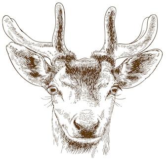Gravure illustratie van rendieren hoofd